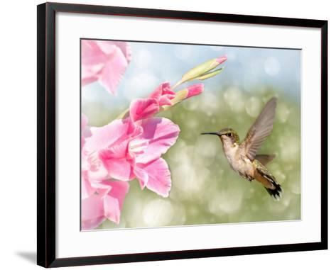 Dreamy Image Of A Ruby-Throated Hummingbird Hovering Next To A Pink Gladiolus Flower-Sari ONeal-Framed Art Print
