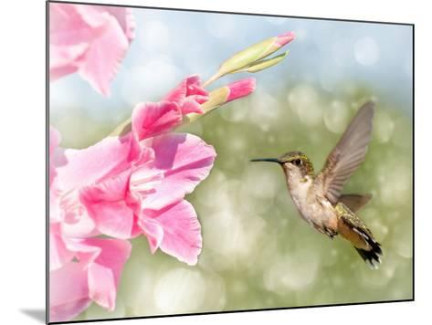 Dreamy Image Of A Ruby-Throated Hummingbird Hovering Next To A Pink Gladiolus Flower-Sari ONeal-Mounted Photographic Print