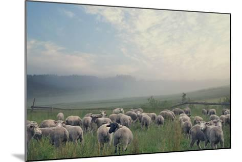 Herd Of Sheep On Beautiful Mountain Meadow-conrado-Mounted Photographic Print