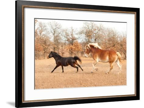 Two Horses Running In A Fall Pasture-Sari ONeal-Framed Art Print