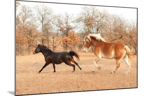Two Horses Running In A Fall Pasture-Sari ONeal-Mounted Photographic Print
