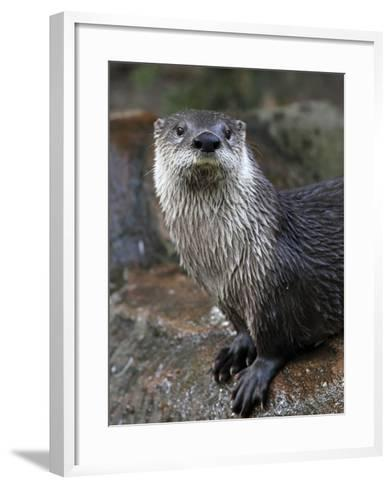 Otter - The Cutest European Mammal-l i g h t p o e t-Framed Art Print