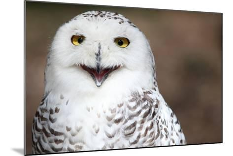 Snowy Owl (Bubo Scandiacus) Smiling And Laughing-l i g h t p o e t-Mounted Photographic Print