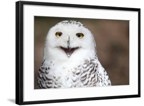 Snowy Owl (Bubo Scandiacus) Smiling And Laughing-l i g h t p o e t-Framed Art Print