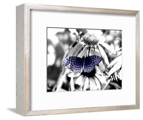 Black And White Butterfly-Jenn Gaylord-Framed Art Print