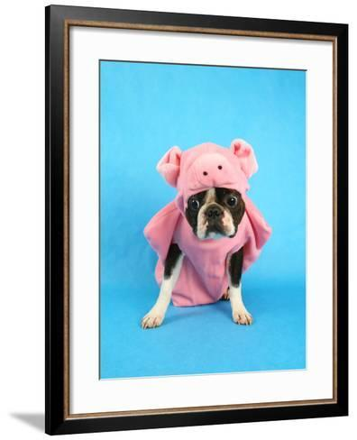 A Boston Terrier In A Pig Costume-graphicphoto-Framed Art Print
