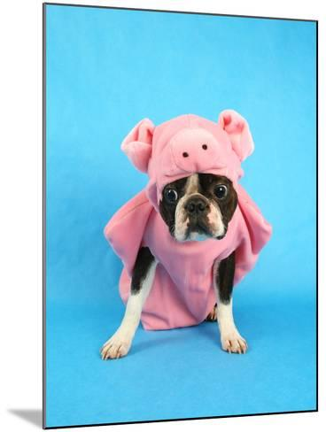 A Boston Terrier In A Pig Costume-graphicphoto-Mounted Photographic Print