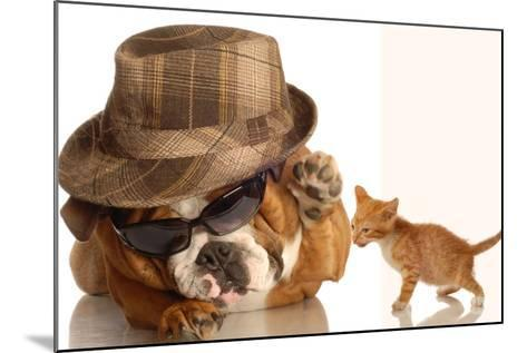 Bulldog Gangster With Kitten-Willee Cole-Mounted Photographic Print