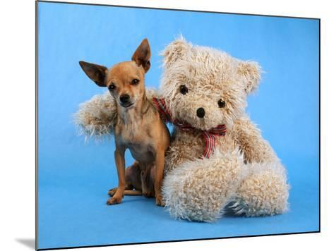 A Teddy Bear With His Arm Around A Tiny Chihuahua-graphicphoto-Mounted Photographic Print