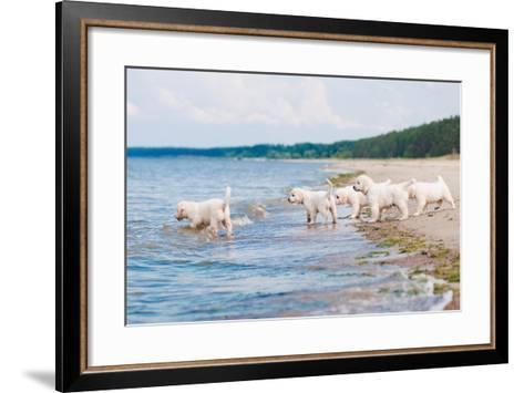 Golden Retriever Puppies At The Sea-ots-photo-Framed Art Print