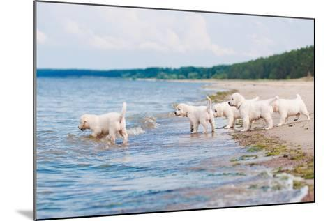 Golden Retriever Puppies At The Sea-ots-photo-Mounted Photographic Print