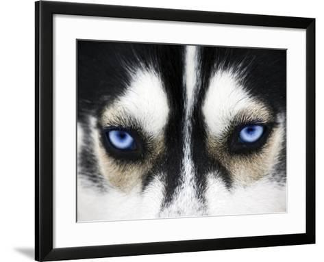 Close Up On Blue Eyes Of A Dog-melis-Framed Art Print