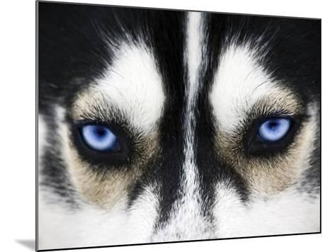 Close Up On Blue Eyes Of A Dog-melis-Mounted Photographic Print
