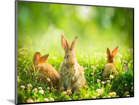 Rabbits-Subbotina Anna-Mounted Photographic Print