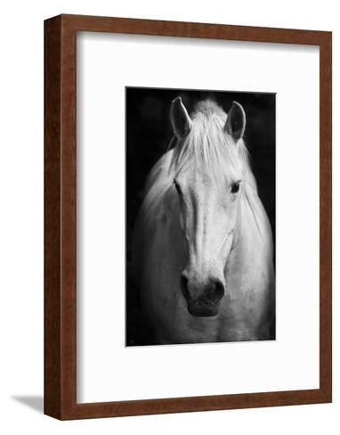 White Horse\'S Black And White Art Portrait Photographic Print by ...
