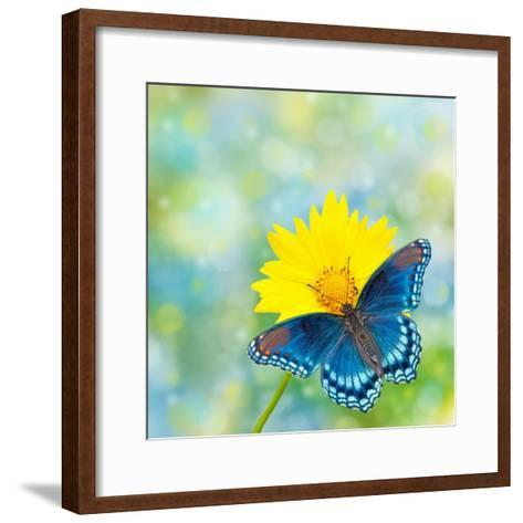 Red-Spotted Purple Admiral On Yellow Coreopsis Flower-Sari ONeal-Framed Art Print