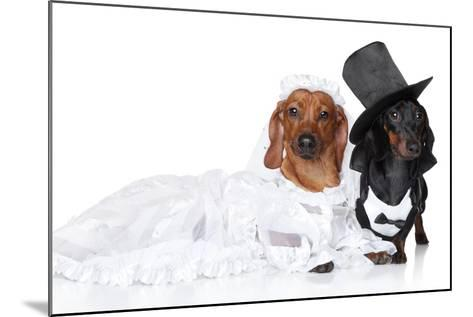 Fashionable Dachshund Dog Wedding-Jagodka-Mounted Photographic Print