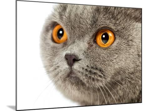 British Shorthair Cat-AberratioN-Mounted Photographic Print