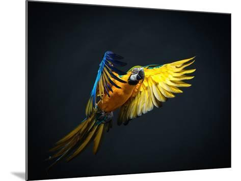 Colourful Flying Ara On A Dark Background-NejroN Photo-Mounted Photographic Print