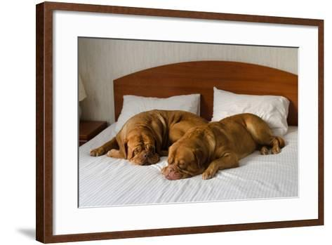 Dogue De Bordeaux Funny Couple In The Bed-vitalytitov-Framed Art Print