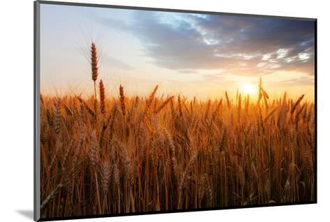 Wheat Field over Sunset-TTstudio-Mounted Photographic Print