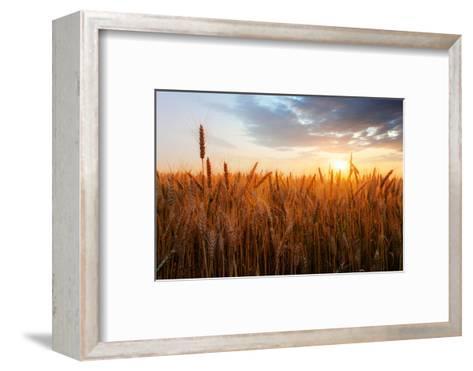 Wheat Field over Sunset-TTstudio-Framed Art Print