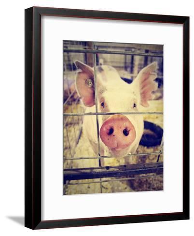 A Pig at a Local Fair-graphicphoto-Framed Art Print