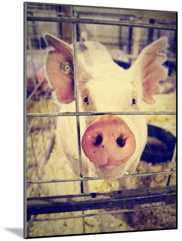 A Pig at a Local Fair-graphicphoto-Mounted Photographic Print
