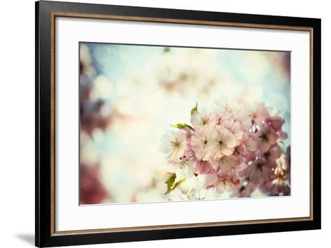 Vintage Photo of White Cherry Tree Flowers in Spring-Petr Jilek-Framed Art Print