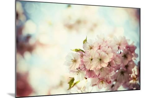 Vintage Photo of White Cherry Tree Flowers in Spring-Petr Jilek-Mounted Photographic Print