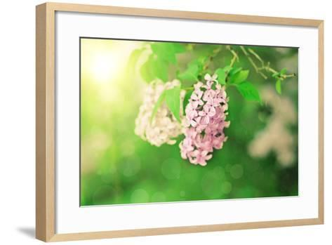 Branch of Lilac Flowers-Roxana_ro-Framed Art Print