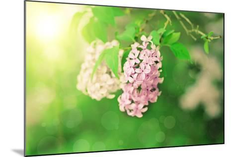 Branch of Lilac Flowers-Roxana_ro-Mounted Photographic Print