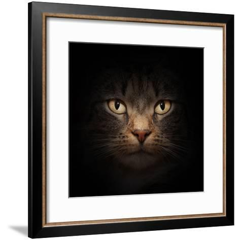 Cat Face With Beautiful Eyes Close Up Portrait-Michal Bednarek-Framed Art Print