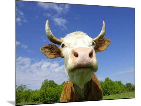 Brown Holstein Cow In The Field Looking At You-Volokhatiuk-Mounted Photographic Print