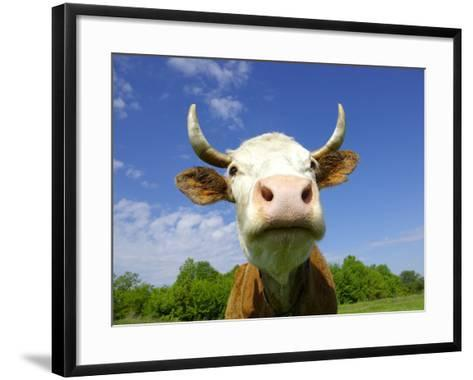 Brown Holstein Cow In The Field Looking At You-Volokhatiuk-Framed Art Print