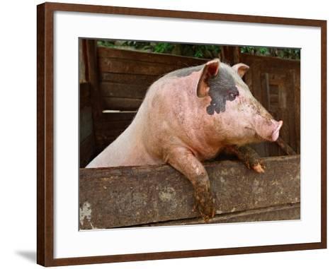 Pork-grigvovan-Framed Art Print