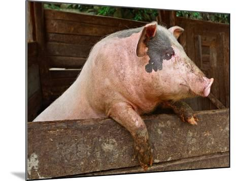 Pork-grigvovan-Mounted Photographic Print
