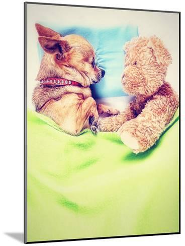 A Cute Chihuahua Sleeping Next to a Teddy Bear-graphicphoto-Mounted Photographic Print