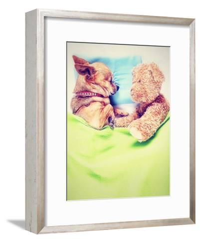 A Cute Chihuahua Sleeping Next to a Teddy Bear-graphicphoto-Framed Art Print