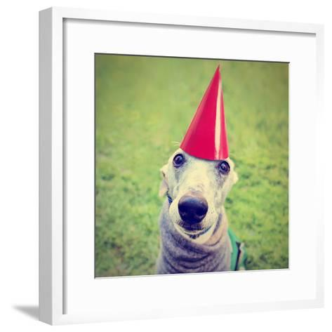 A Cute Dog in a Local Park with a Birthday Hat-graphicphoto-Framed Art Print