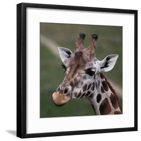 Giraffe - Close-Up Portrait Of This Beautiful African Animal-l i g h t p o e t-Framed Art Print