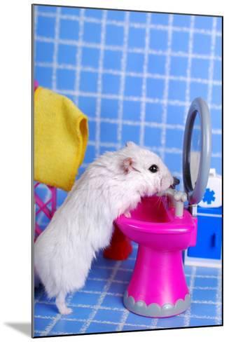 Hamster In The Bathroom- teresaterra-Mounted Photographic Print