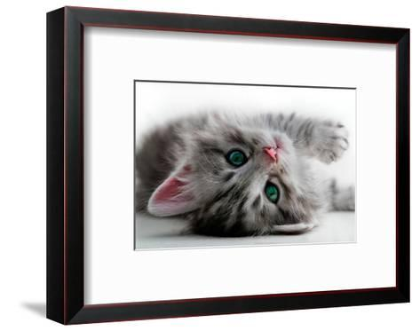 Kitten Rests - Isolated-Orhan-Framed Art Print