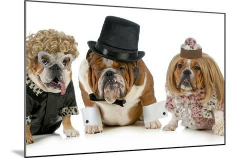 Males Bulldog With Two Females All Dressed In Formal Clothing Isolated On White Background-Willee Cole-Mounted Photographic Print