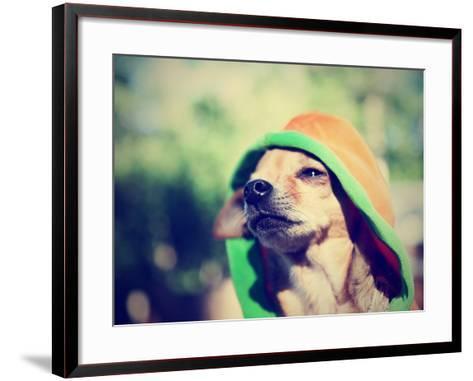 A Cute Chihuahua in a Hoodie-graphicphoto-Framed Art Print