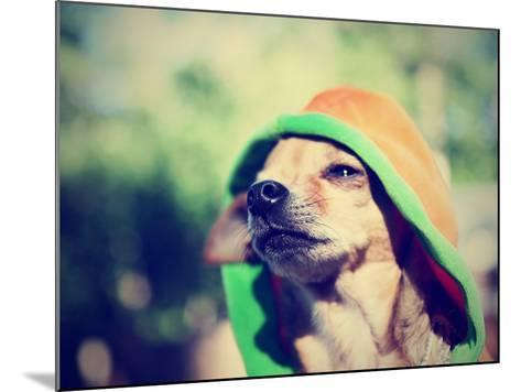 A Cute Chihuahua in a Hoodie-graphicphoto-Mounted Photographic Print