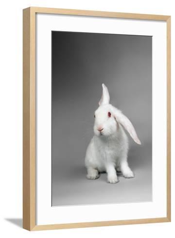 Fluffy White Rabbit Over Grey Background-PH.OK-Framed Art Print