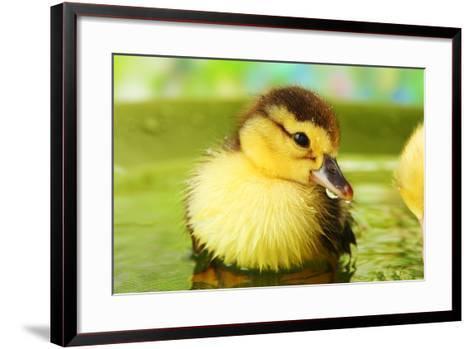 Cute Ducklings Swimming, On Bright Background-Yastremska-Framed Art Print