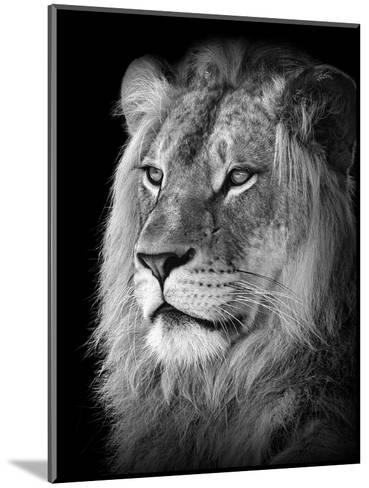 Portrait Of A Lion In Black And White-Reinhold Leitner-Mounted Photographic Print