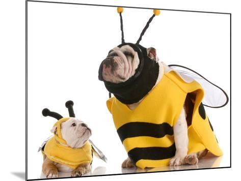 Bulldog Bee Mother And Daughter-Willee Cole-Mounted Photographic Print